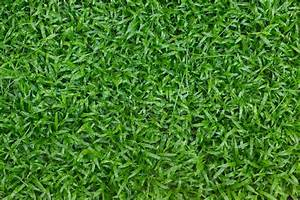 Green grass turf in garden, natural eco background | Stock ...