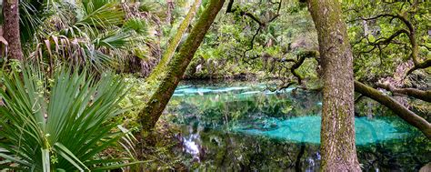 Fern Hammock Springs by Fern Hammock Springs Eric Clay Photography