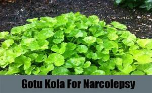 6 Natural Cure For Narcolepsy