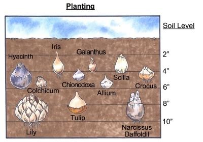 thinking about planting bulbs now is the time 2