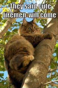 cat stuck in tree cats cat gets stuck breeds picture
