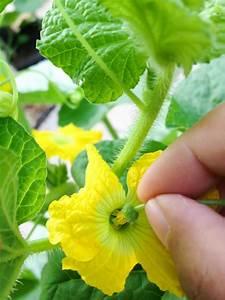 Garden Pollination