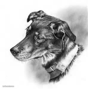 Beautiful Art Drawings of Dogs