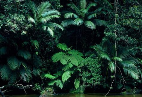 Green Leaves Tumblr  Wwwimgkidcom  The Image Kid Has It