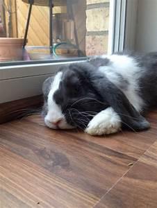Haustiere Für Die Wohnung : kaninchenstall selber bauen bauanleitung f r die wohnung nagetiere kleintiere kaninchen ~ Frokenaadalensverden.com Haus und Dekorationen