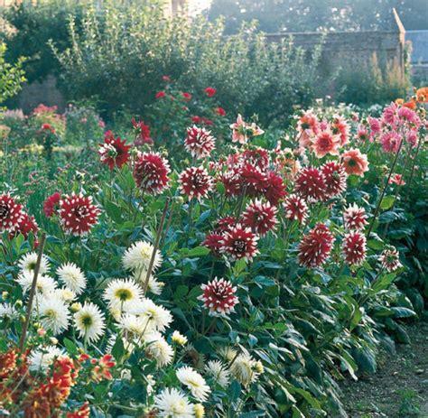 Der Blühende Garten by Der Cottage Garten Erst Die Unordung Macht Ihn Sch 246 N