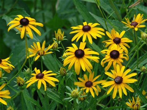 North Carolina Native Plants  You Should Grow That