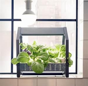 Indoor Gewächshaus Mit Beleuchtung : urban gardening war gestern jetzt kommt indoor farming welt ~ Watch28wear.com Haus und Dekorationen