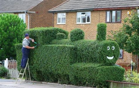 hedge design how to grow a garden privacy hedge useful tips ideas and designs