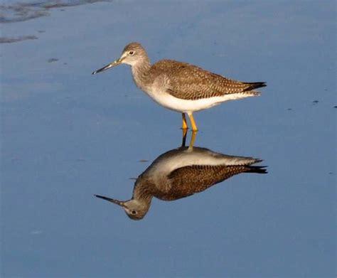 birds of the monterey bay area