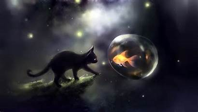 Fish Gold Wallpapers Cat Definition Different