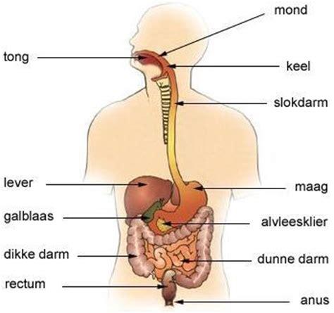Voeding nieren
