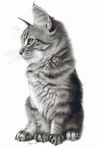 Realistic Pencil Cat Drawings