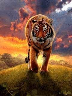 animated tiger screensavers bing images fotos de