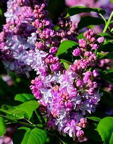 Der April Ist Pflanzzeit Für Stauden Gartenratgebernet