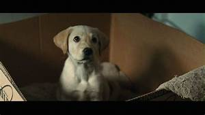 Marley and Me images Marley & Me HD wallpaper and ...
