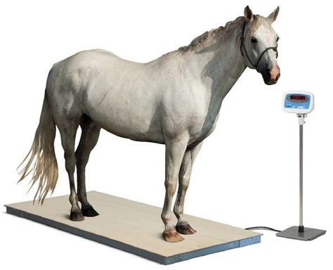 salter brecknell ps hd floor scale veterinary scale