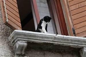 Gekippte Fenster Sichern : gefahrenquellen im katzenhaushalt waschmaschine ~ Michelbontemps.com Haus und Dekorationen