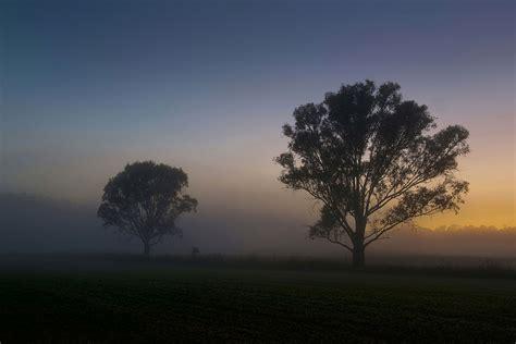 deux arbres solitaires fond decran widescreen gratuit