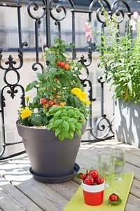 Pot Pour Balcon : planter des tomates cerises en pot comment faire bpl 2016 pinterest planter des ~ Teatrodelosmanantiales.com Idées de Décoration