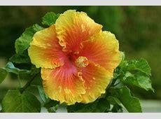 Ideas for Small Tropical Garden LoveToKnow