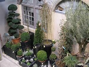 Plantes D Extérieur Pour Terrasse : plantes d 39 ext rieur d 39 exception vatry fleuriste com ~ Dailycaller-alerts.com Idées de Décoration