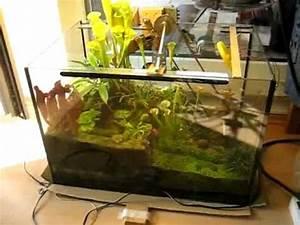Pflanzen Für Terrarium : terrarium mit bewegung m rz 2010 youtube ~ Orissabook.com Haus und Dekorationen