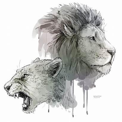 Lion Transparent Drawing Lioness Background Roar Lions