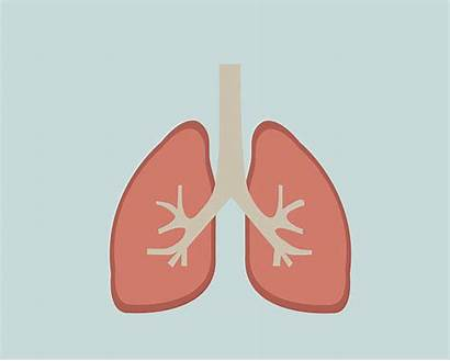 Vector Lung Human Lungs Clip Illustrations Background