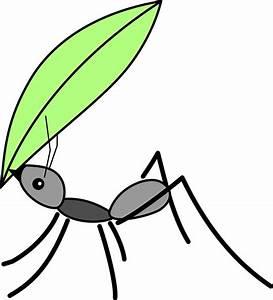 Hausmittel Gegen Ameisen Im Garten : ameisen vernichten ameisen vernichten nat rliche hausmittel schwarze ameisen k che varie forme ~ Whattoseeinmadrid.com Haus und Dekorationen