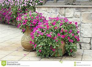 Beautiful Potted Flowers Royalty Free Stock Images - Image ...