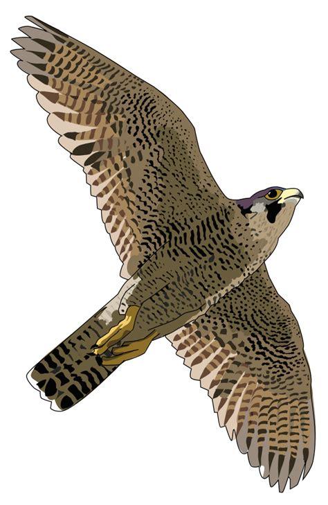 onlinelabels clip art faucon pelerin falcon peregrine