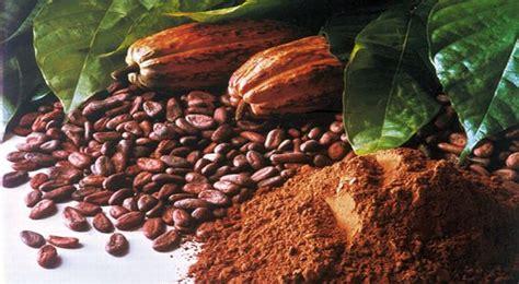 september ditetapkan jadi hari kakao indonesia