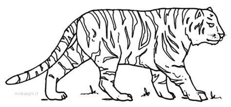 tigre da disegnare per bambini disegni per bambini playingwithfirekitchen