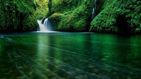 Forest Wallpaper Download Elegant Forest Wallpaper 4 8k