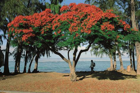 cap cuisine jardins créoles île de la réunion tourisme