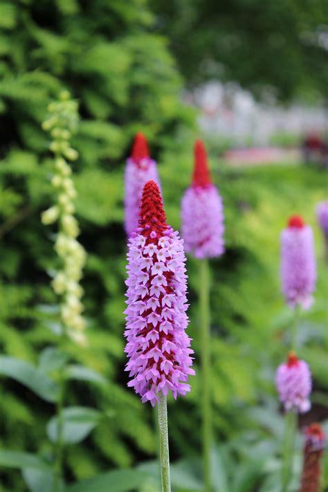 kew gardens 171 babyccino daily tips children s