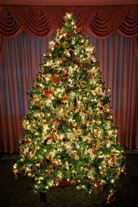 the devils advocate christmas trees real or artificial