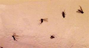 small bathroom flies With bathroom drain flies