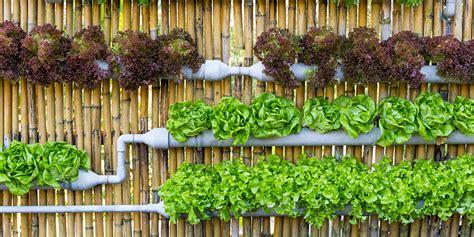 indoor vertical garden 8 reasons why you should start a vertical garden today