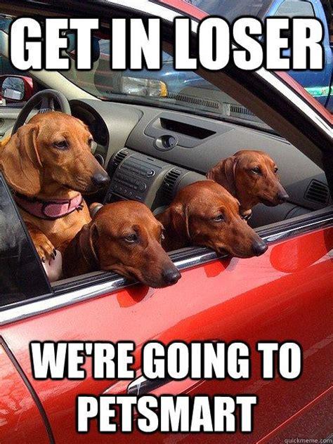 Best 25 Dachshund Meme Ideas On Pinterest Funny Puppies