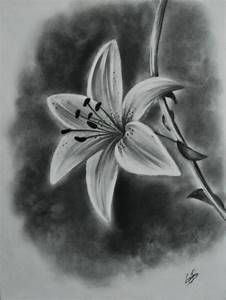 #pencil #drawing #realistic #lily #flower | Drawing ...