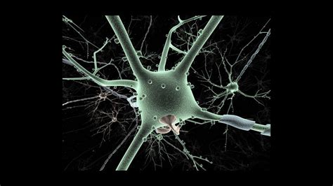stressed  brain cells  protect  alzheimers