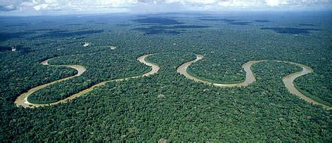 amazon rainforest important wwf