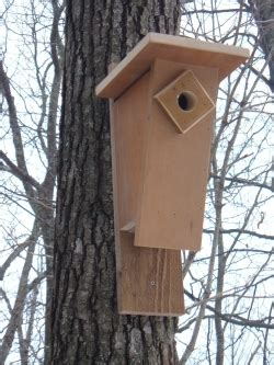 cool bluebird house plans attract yard sufficient living
