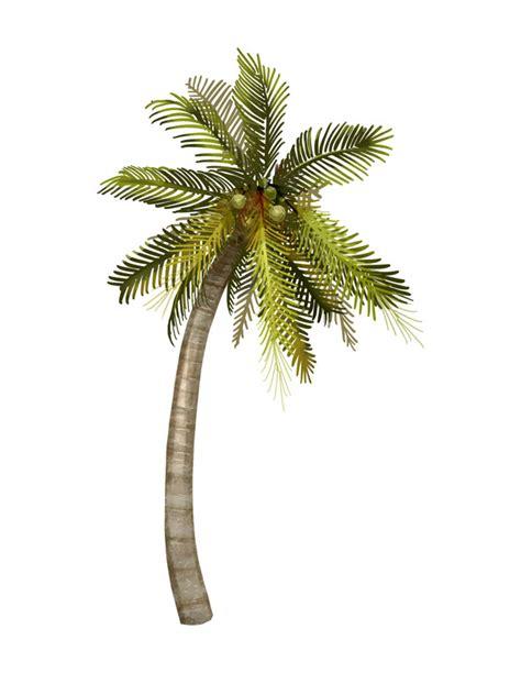 ilustracao de coqueiro tropical baixar vetores gratis