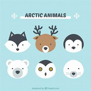 Polar Bear Vectors, Photos and PSD files | Free Download