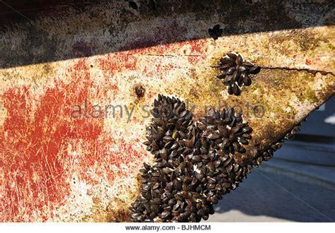 Barnacles On Boats by Barnacles Boat Stock Photos Barnacles Boat Stock Images