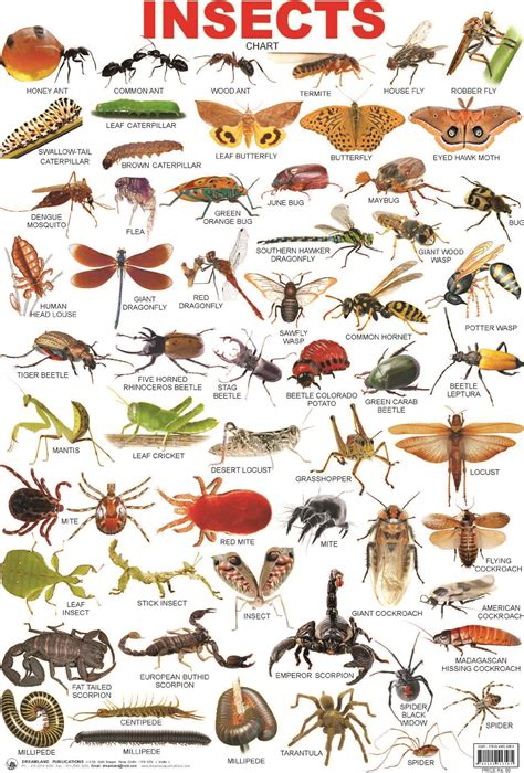 Image result for insects grade school unit English