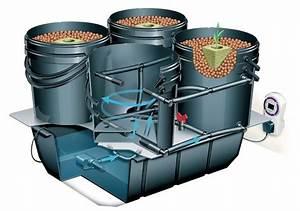 Understanding Dwc And Recirculating Deep Water Culture